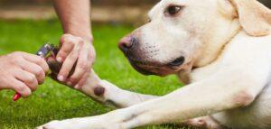 honden nagelknipper