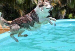 hond zwembad