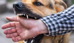 hond bijten afleren