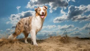 medium hondenrassen