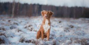 middelgrote populairste hondenrassen