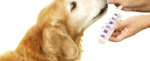 ontwormen hond