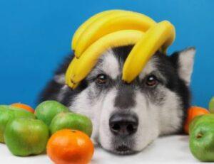 welk fruit mag een hond eten