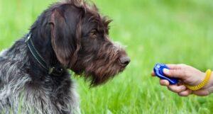 Clickertraining voor honden