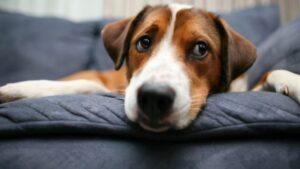 honden die goed alleen kunnen zijn