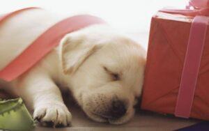 puppypakketten