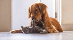 Uw kat en uw hond kunnen vaak leren goede vrienden te zijn met de juiste training