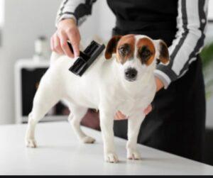 hondenborstels