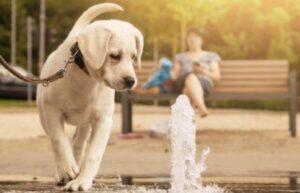 waterfontein hond