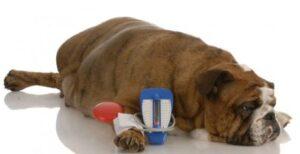 Diabetes bij honden