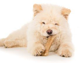 Puppy eet bot