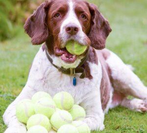 Waarom houden honden van ballen