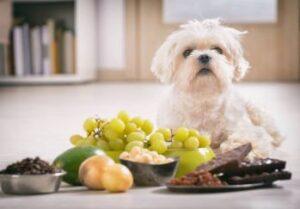 hond met avocado