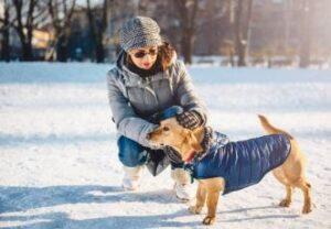 hondenjas winter