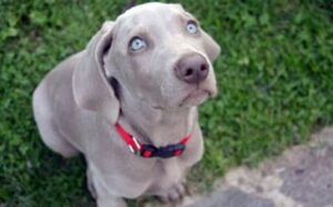 signalen dat uw hond stress heeft