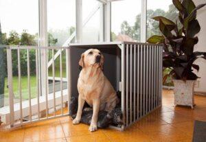 Kamerkennel M3 DK voor de grotere honden