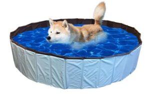 hondenzwembad groot