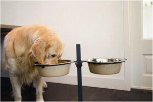 Beste hondenvoerbak op standaard