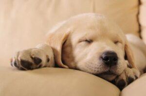 hond in een hondenmand met grote maat