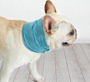 koelband hond
