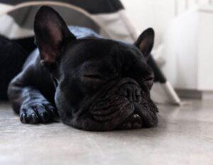 dosering van CBD-olie hond