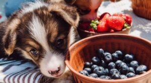 hond eet bosbessen