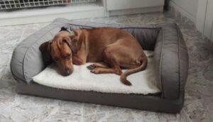orthopedisch hondenbed