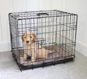hondenbench labrador